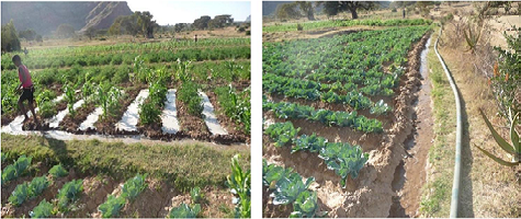Institutional REFORM in Small-Scale Irrigation Development System in Ethiopia: Lessons from Agricultural Growth Program (AGP)